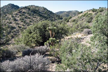 South McCullough Wilderness Area